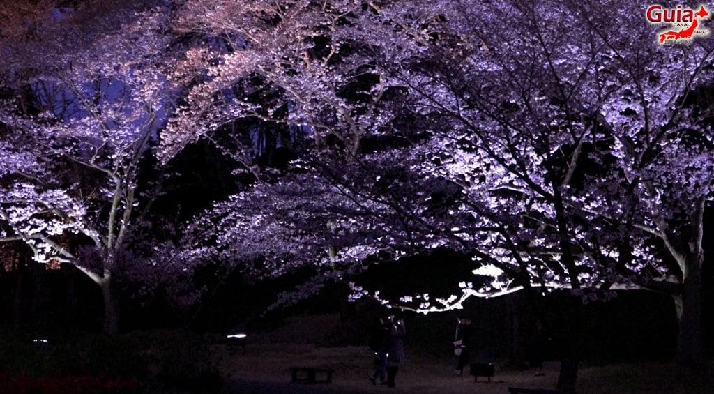 Parque de flores Hamamatsu - Parque de flores 79