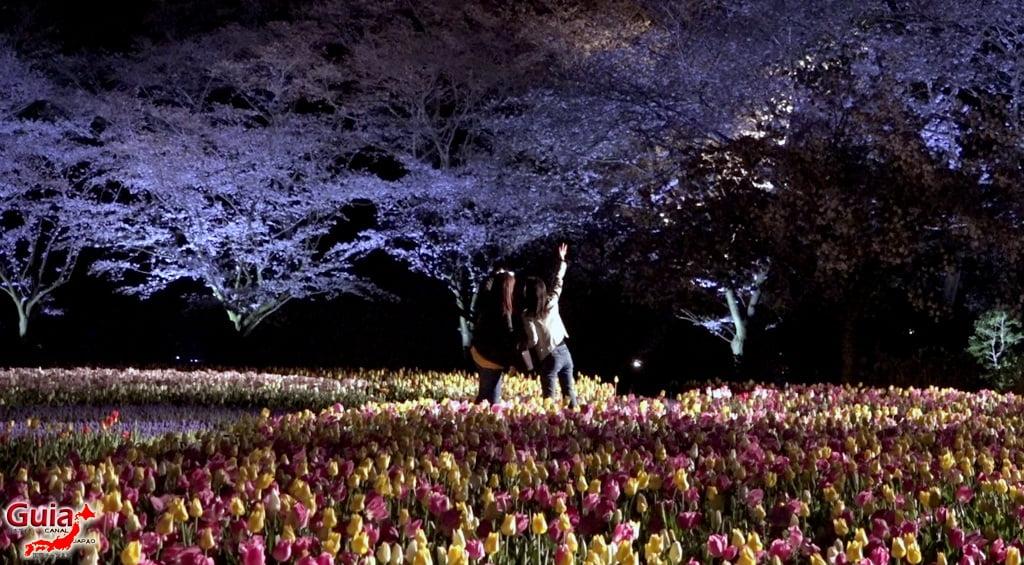Parque de flores Hamamatsu - Parque de flores 80