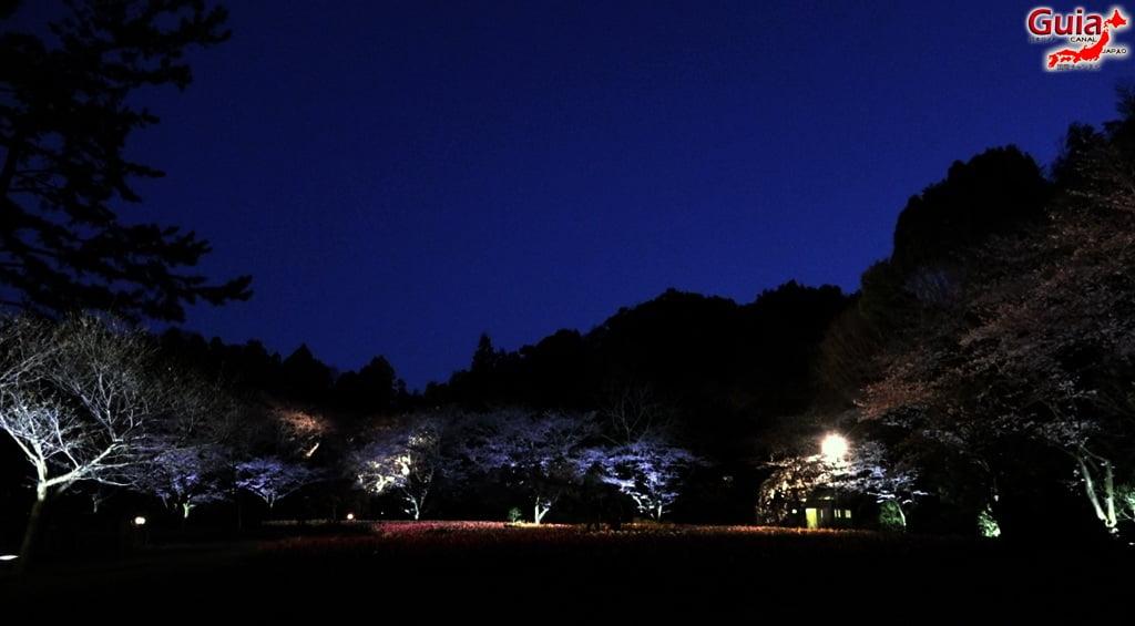 Parque de flores Hamamatsu - Parque de flores 81