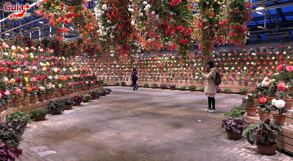 Nabana no Sato - Parque de flores 87