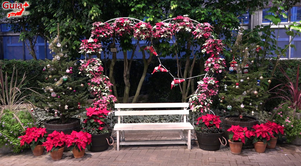 Nabana no Sato - Parque de flores 89