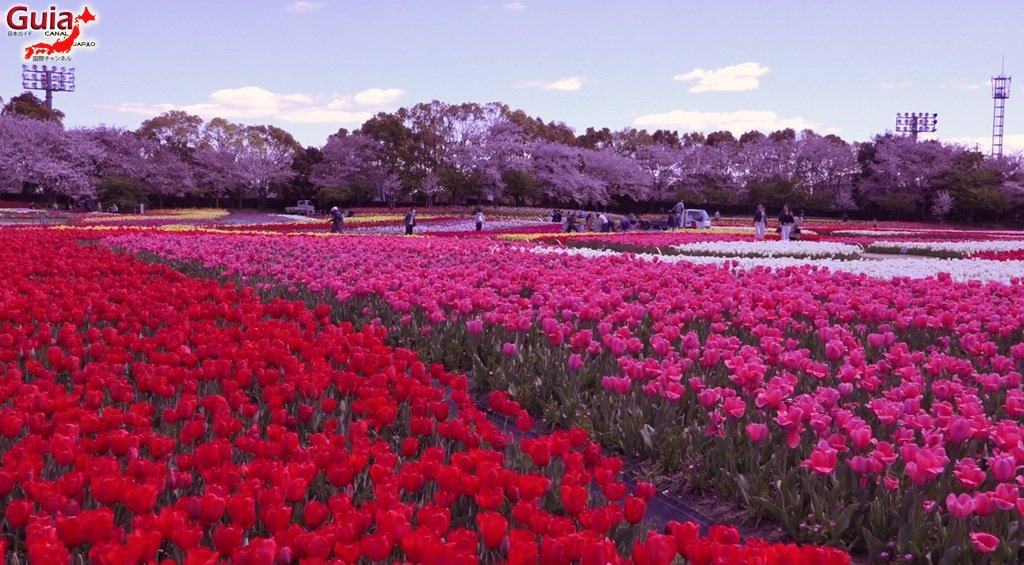 Nabana no Sato - Parque de flores 12