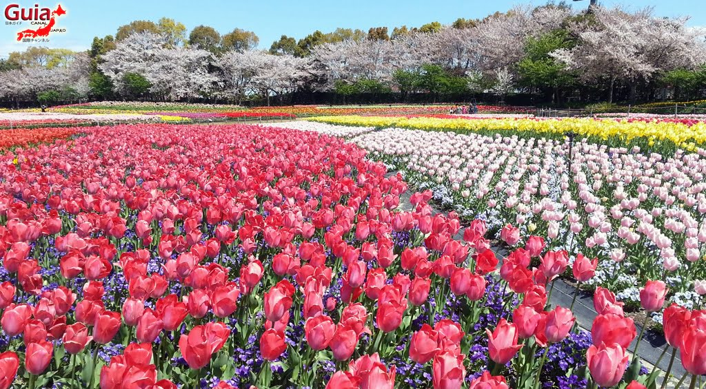Nabana no Sato - Parque de flores 13