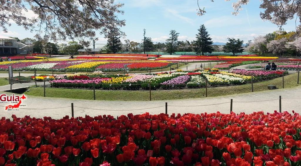 Nabana no Sato - Parque de flores 14