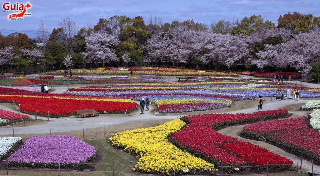 Nabana no Sato - Parque de flores 15