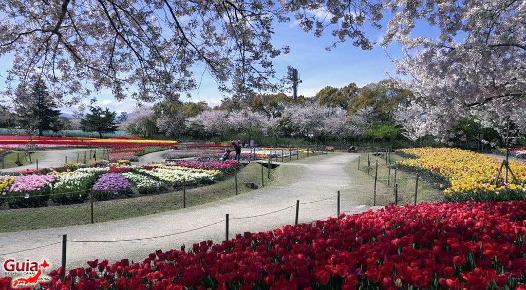 Nabana no Sato - Parque de flores 16