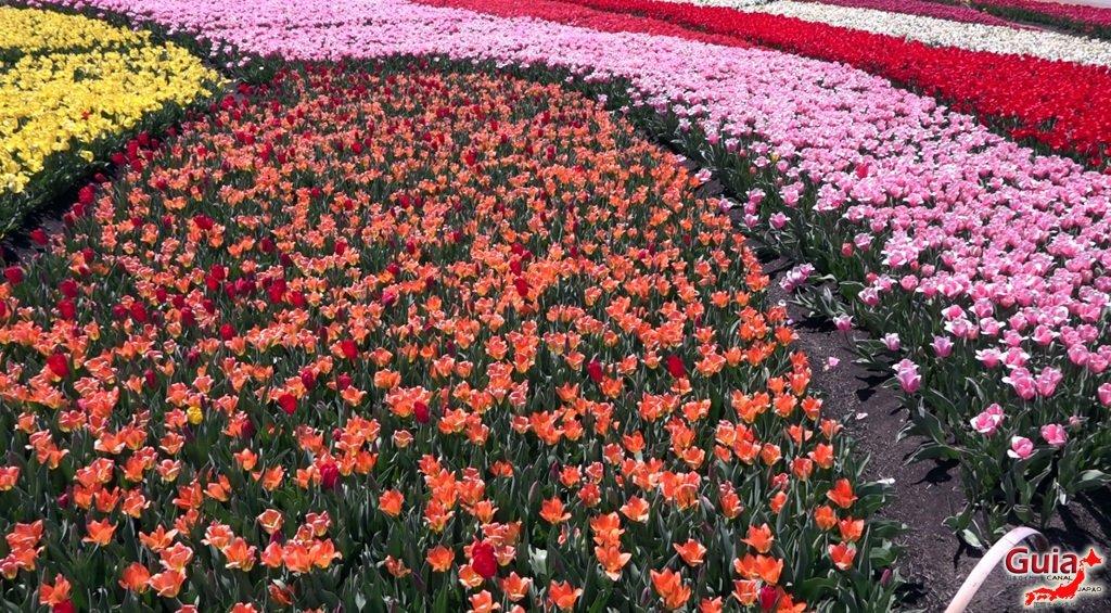 Nabana no Sato - Parque de flores 7