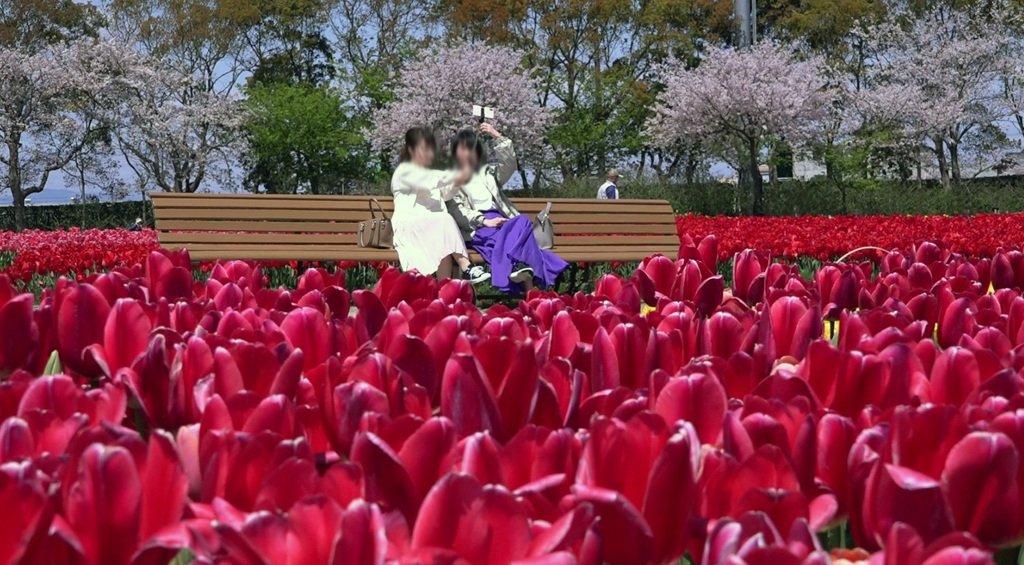 Nabana no Sato - Parque de flores 8