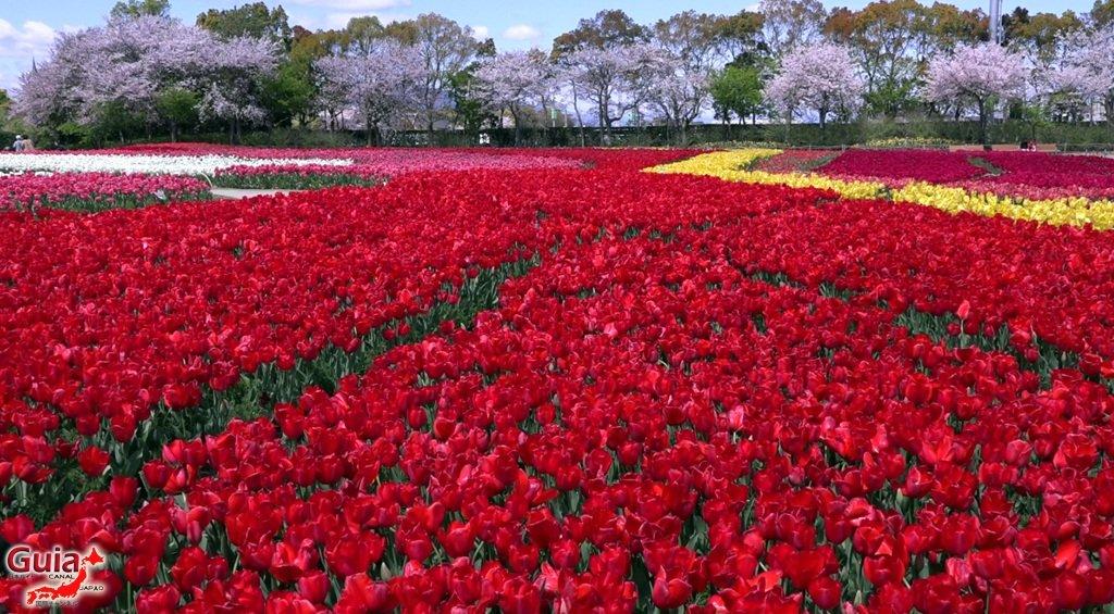 Nabana no Sato - Parque de flores 10