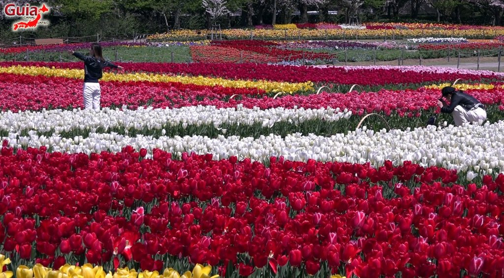 Nabana no Sato - Parque de flores 11