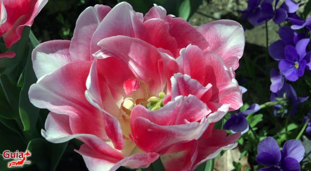 Nabana no Sato - Parque de flores 22