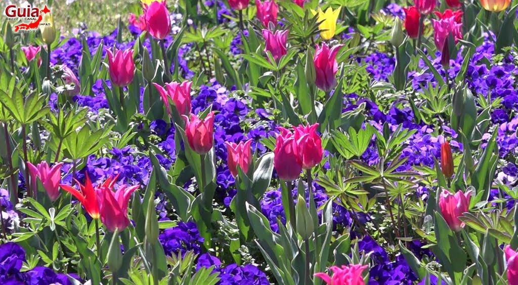 Nabana no Sato - Parque de flores 28