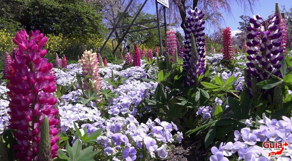 Nabana no Sato - Parque de flores 29