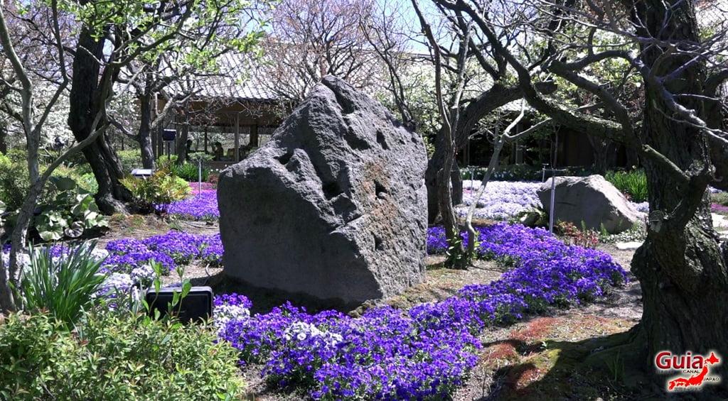 Nabana no Sato - Parque de flores 30