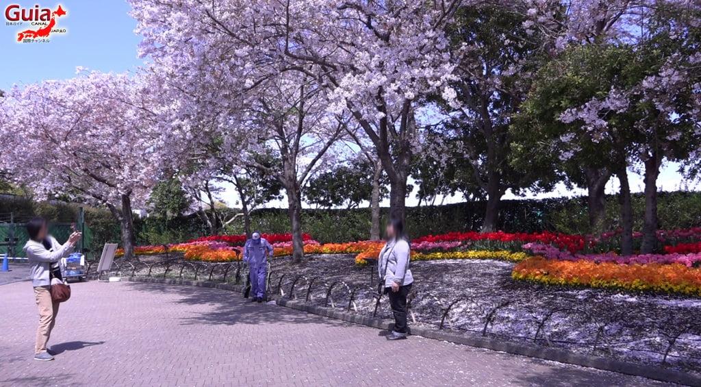 Nabana no Sato - Parque de flores 31