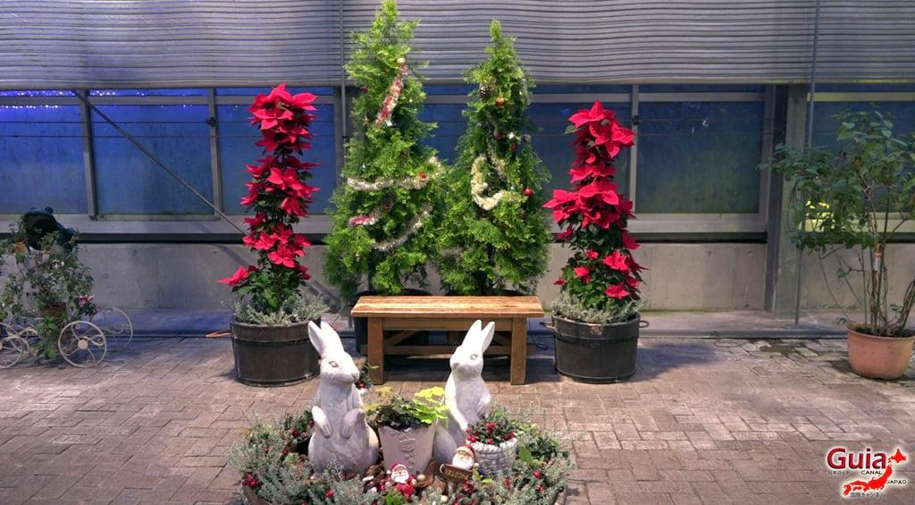 Nabana no Sato - Parque de flores 42