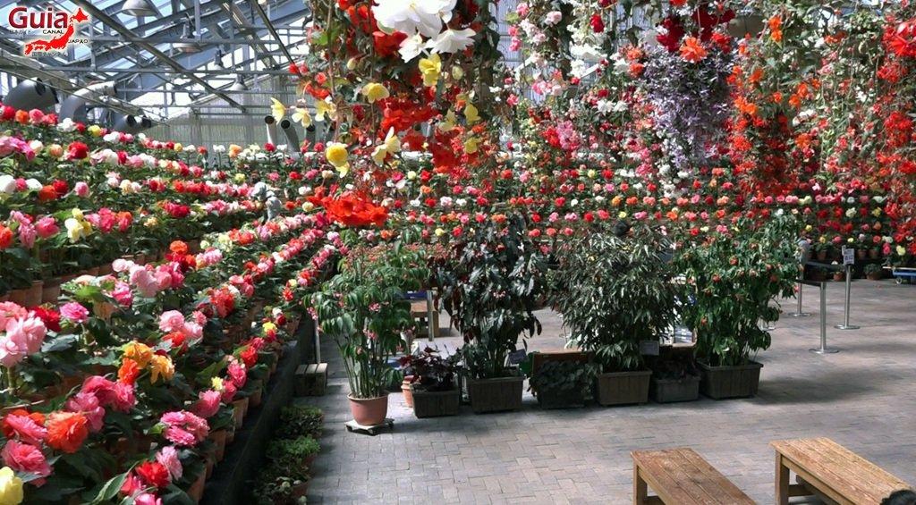 Nabana no Sato - Parque de flores 38