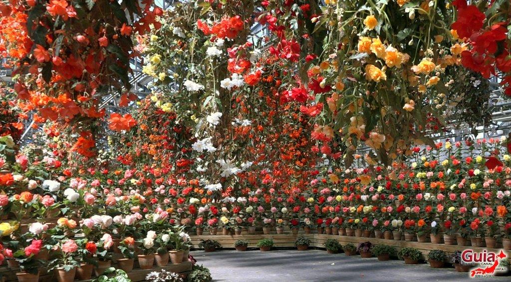 Nabana no Sato - Parque de flores 39