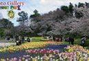 Hamamatsu Flower Park – Photo Gallery