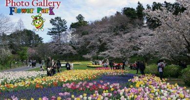 Hamamatsu Flower Park - Photo Gallery 18