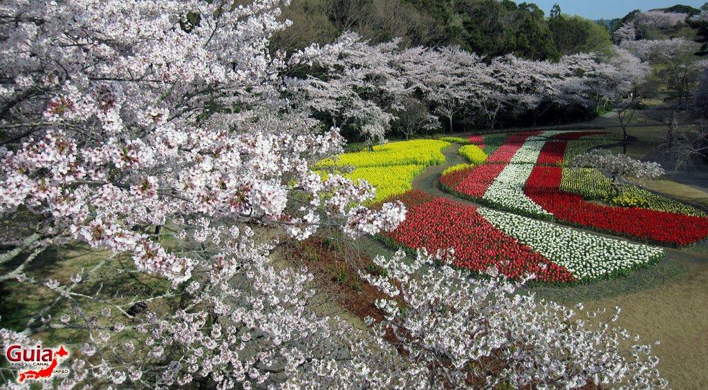 Parque de flores Hamamatsu - Galería de fotos 11