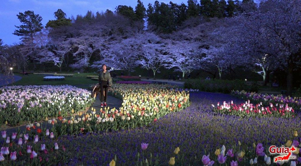 Parque de flores Hamamatsu - Galería de fotos 22