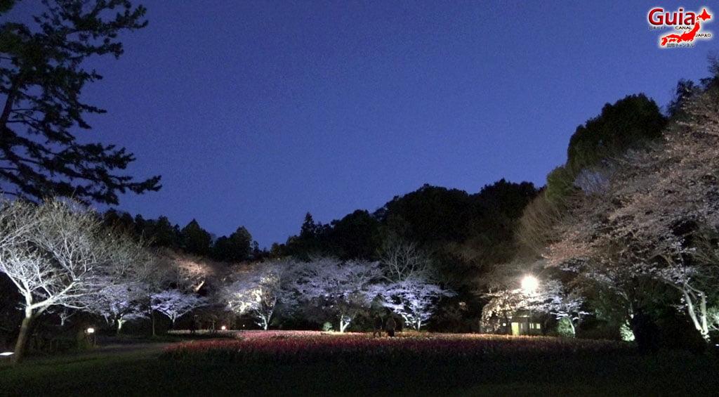 Parque de flores Hamamatsu - Galería de fotos 23
