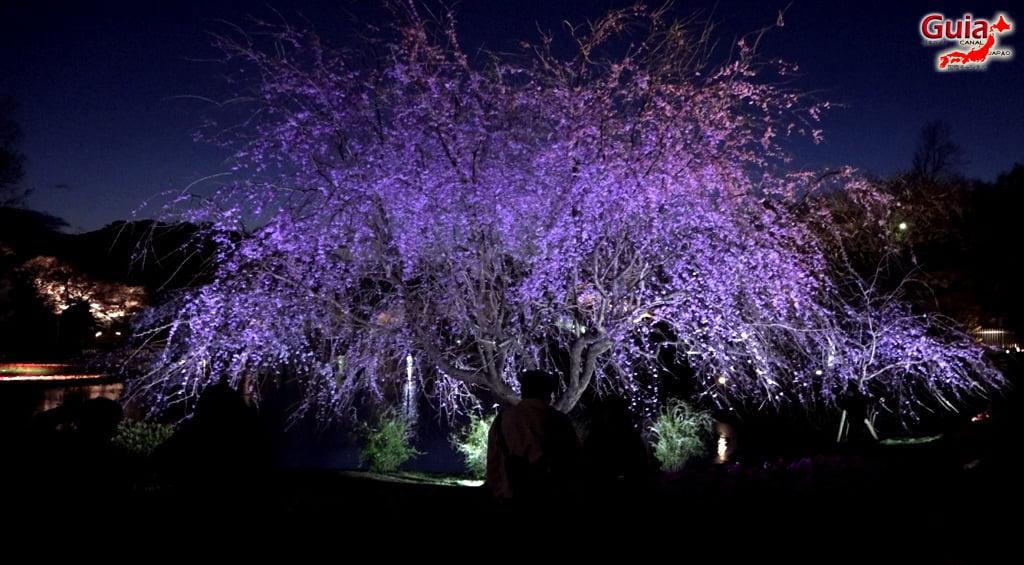 Parque de flores Hamamatsu - Galería de fotos 31