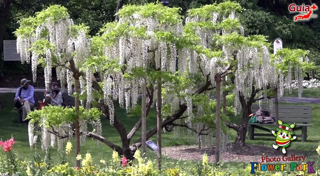 Parque de flores Hamamatsu - Galería de fotos 48