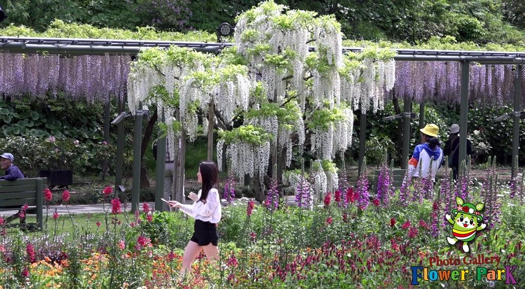 Parque de flores Hamamatsu - Galería de fotos 49