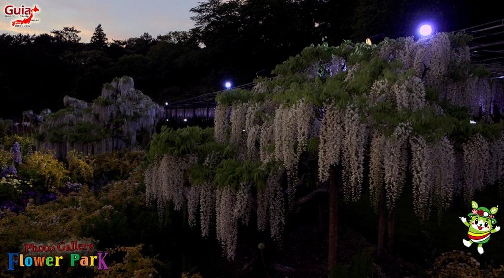 Parque de flores Hamamatsu - Galería de fotos 54