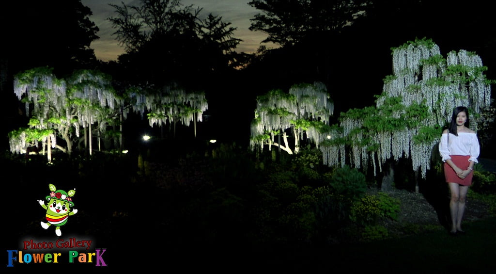 Parque de flores Hamamatsu - Galería de fotos 56