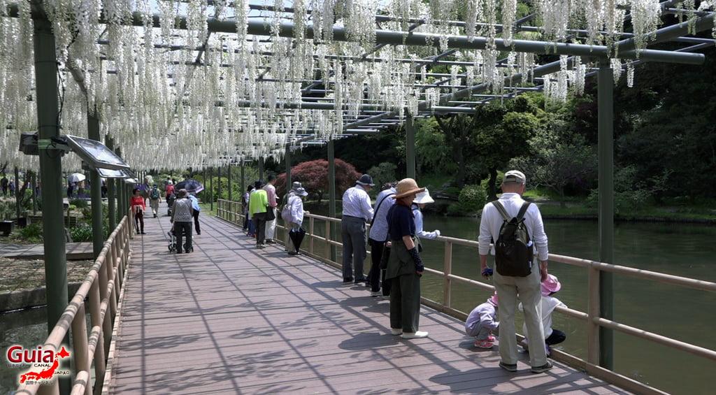 Parque de flores Hamamatsu - Parque de flores 112