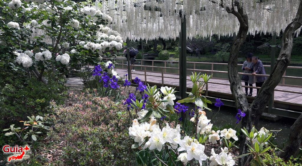 Fuji Flower - Wisteria Season 31