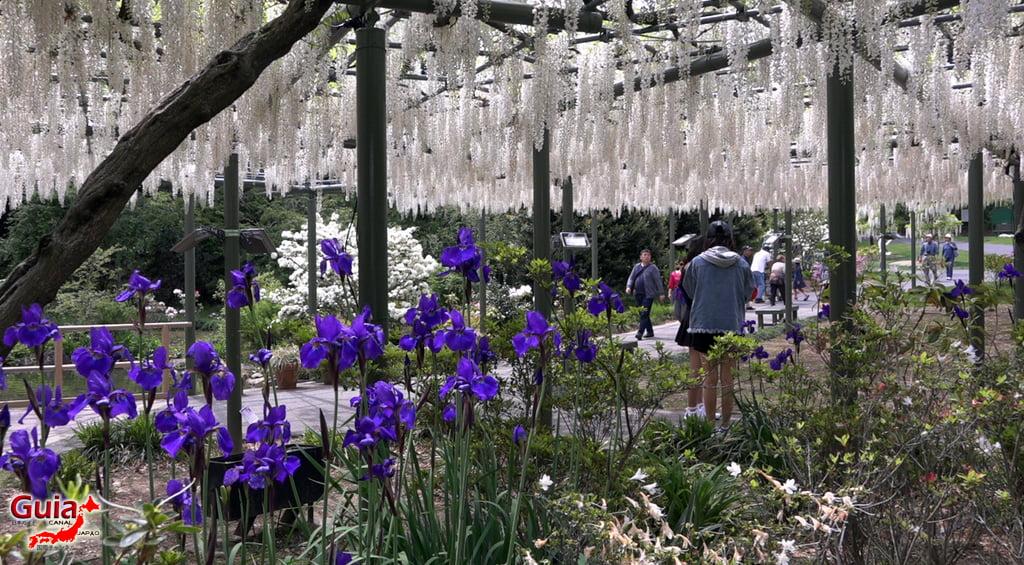 Parque de flores Hamamatsu - Parque de flores 115