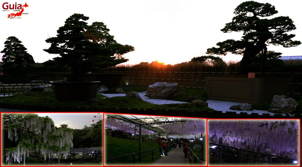 Parque de flores Hamamatsu - Parque de flores 119