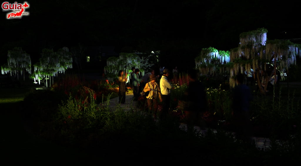 Фүжи цэцэг - Wisteria улирал 39