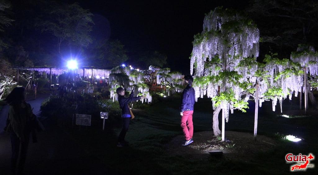Fuji Flower - Wisteria Season 42