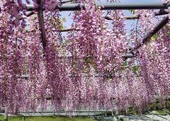 Parque de flores Hamamatsu - Parque de flores 92