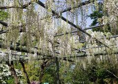 Parque de flores Hamamatsu - Parque de flores 93