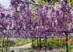 Parque de flores Hamamatsu - Parque de flores 91