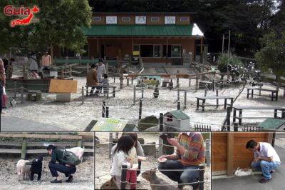 아이치 보쿠 조-미요시 3의 작은 농장