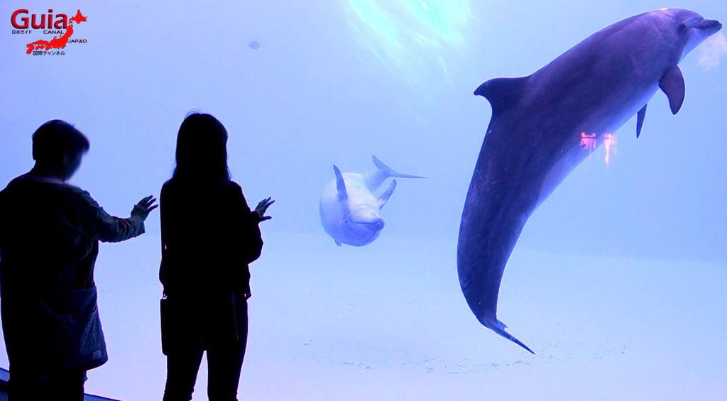 名古屋3水族馆