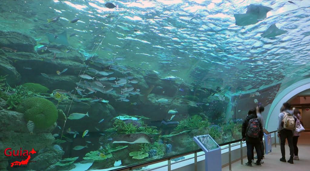 名古屋6水族馆