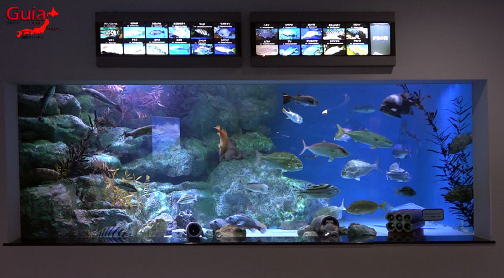 名古屋13水族馆