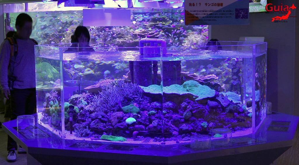 名古屋16水族馆