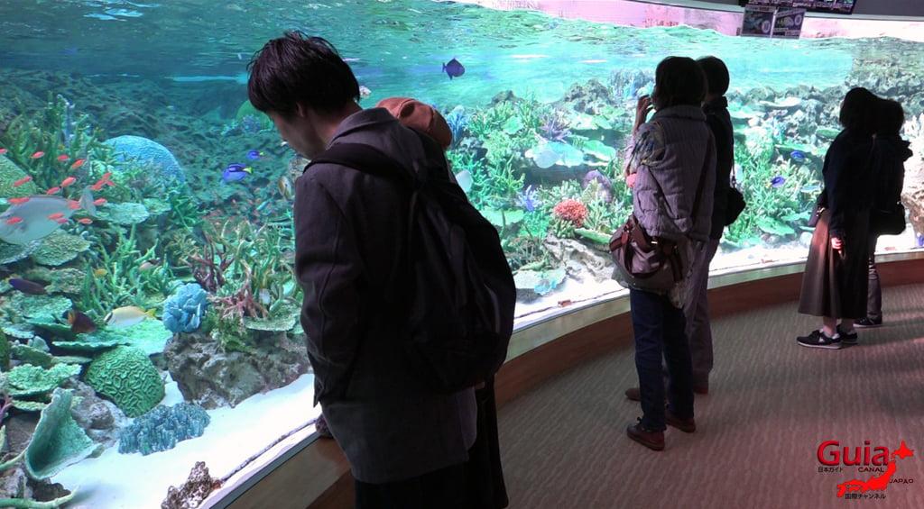 名古屋17水族馆