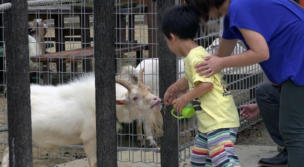 豊橋29動物園と一般植物園