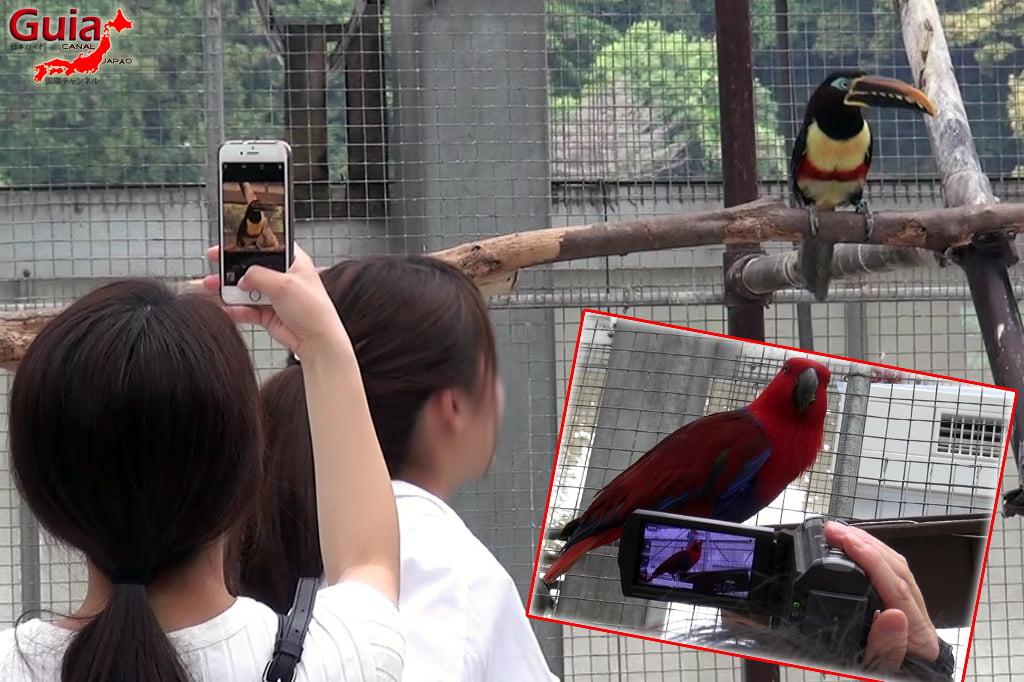 Parque dos pássaros e flores - Kakegawa Kachouen (掛 川 花鳥 園) 15