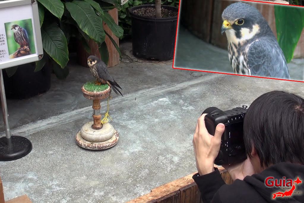 Parque dos pássaros e flores - Kakegawa Kachouen (掛 川 花鳥 園) 21